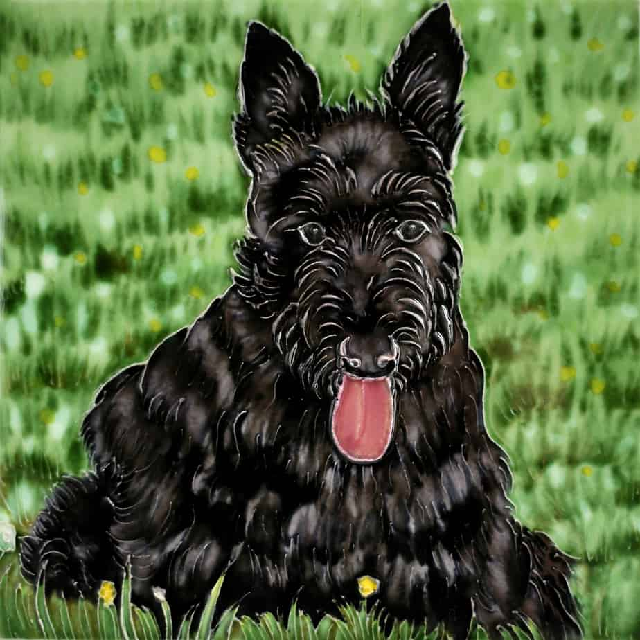 Black Scottish Terrier 8×8 (191114)