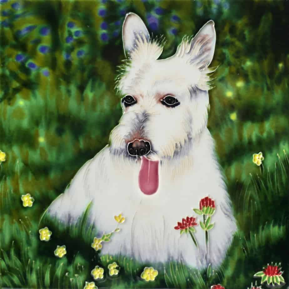 White Scottish Terrier 8×8 (191119)